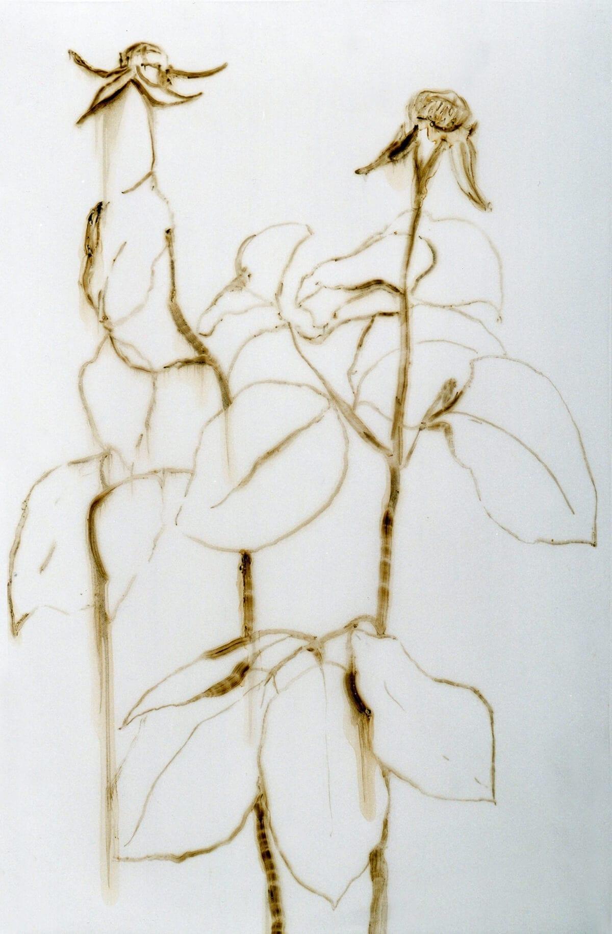 Ángela Nordenstedt, Dos rosas grandes, 2000